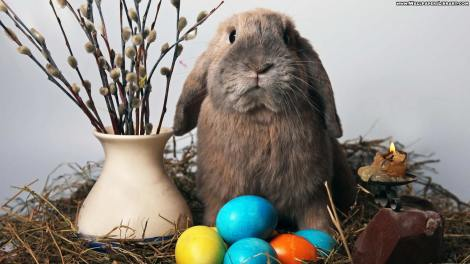 cute-easter-rabbit-wallpapers
